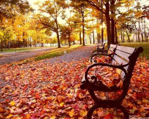 park-bench-autumn