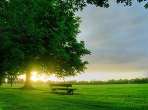 ws_good_morning_sun_1024x768